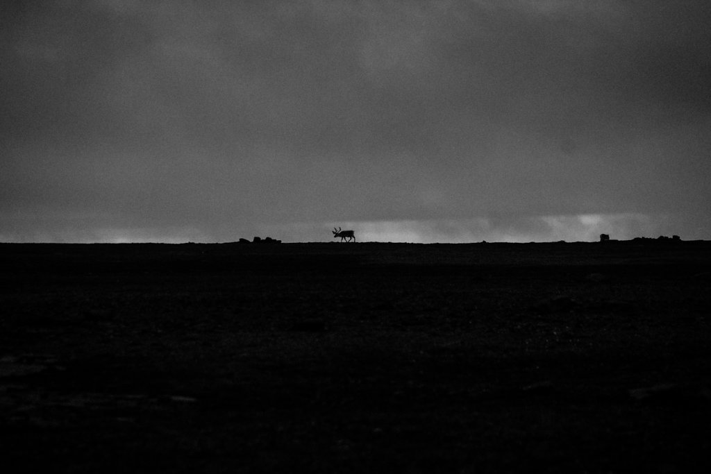svalbard-4468.jpg